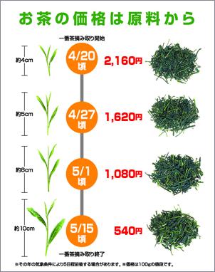 お茶の価格は摘んだ葉の柔らかさと大きさで決まります