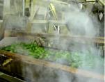 絶妙の蒸し加減の技で最高の味と香りを引出しています