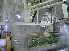 丸々と育った茶葉を不純物のない清水せいすいで蒸す